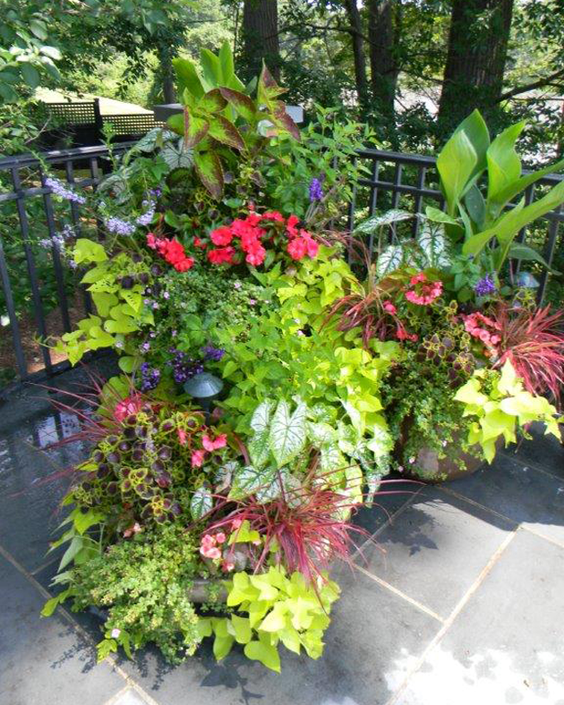 Seasonal Plantings Service Greenwich, CT