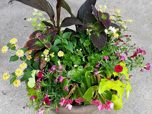 CONTAINER GARDENS-4 Season Program